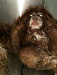 Abandoned Dog Gets Haircut