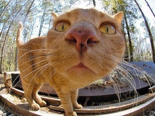 Curious Cats Bumping Into Cameras
