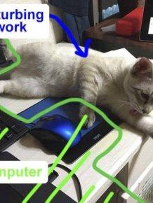 Cats Destroy Keyboards