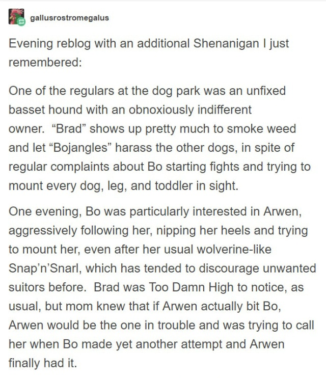 Person Gets A Service Dog Trained In Prison, Discovers How Naughty She Is