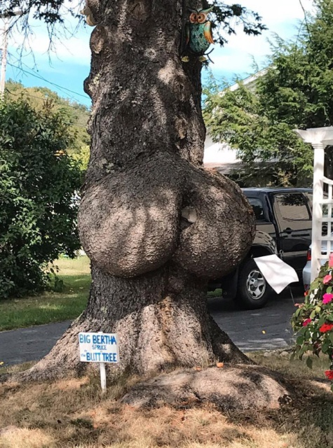 Trees That Look Like Butts