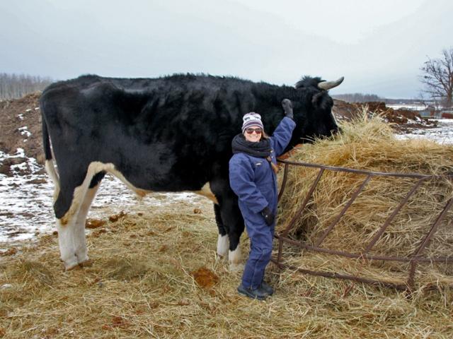 A Big Black Cow Named Dozer