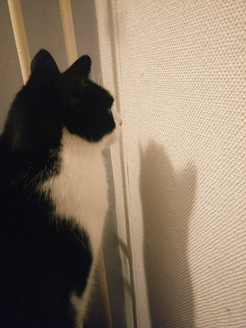 Cats Who Can't Figure Out Walls