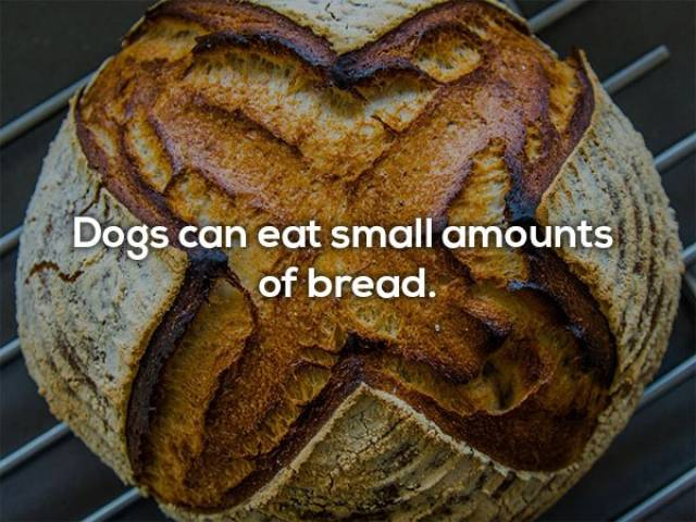 Human Foods That Dogs Can Eat