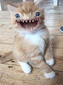 Photoshopped Pets