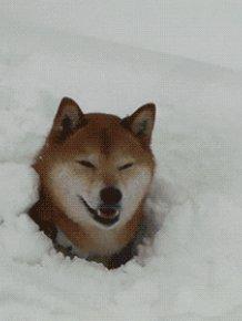 Beautiful derpy dogs that just heckin' love the snow