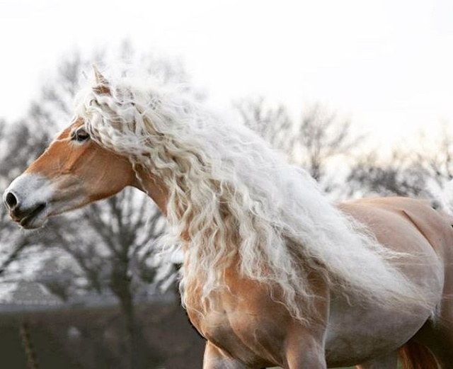 Rapunzel Of Horses