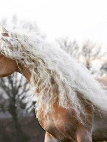 Rapunzel Of Horses