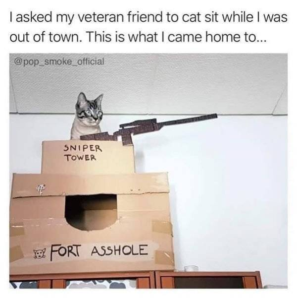 Funny Animals, part 54