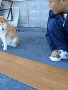 Talented Dogs
