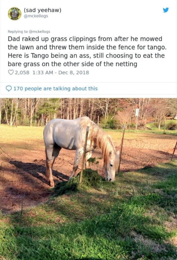 'Tango' The Horse Is Very Smart