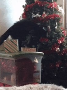 Christmas Tree Fails