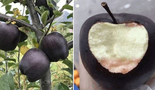 Black Diamond Apples