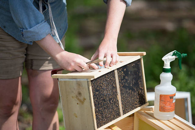 Beekeepers Try To Convince Vegans To Eat Honey