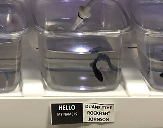 Pet Store Gives Celebrity Names To Their Fishes