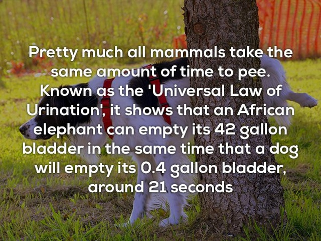 Interesting Facts, part 47