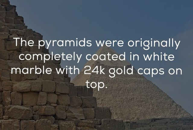 Odd History Facts