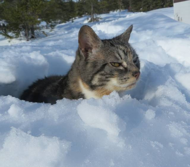 Cats Hate Snow