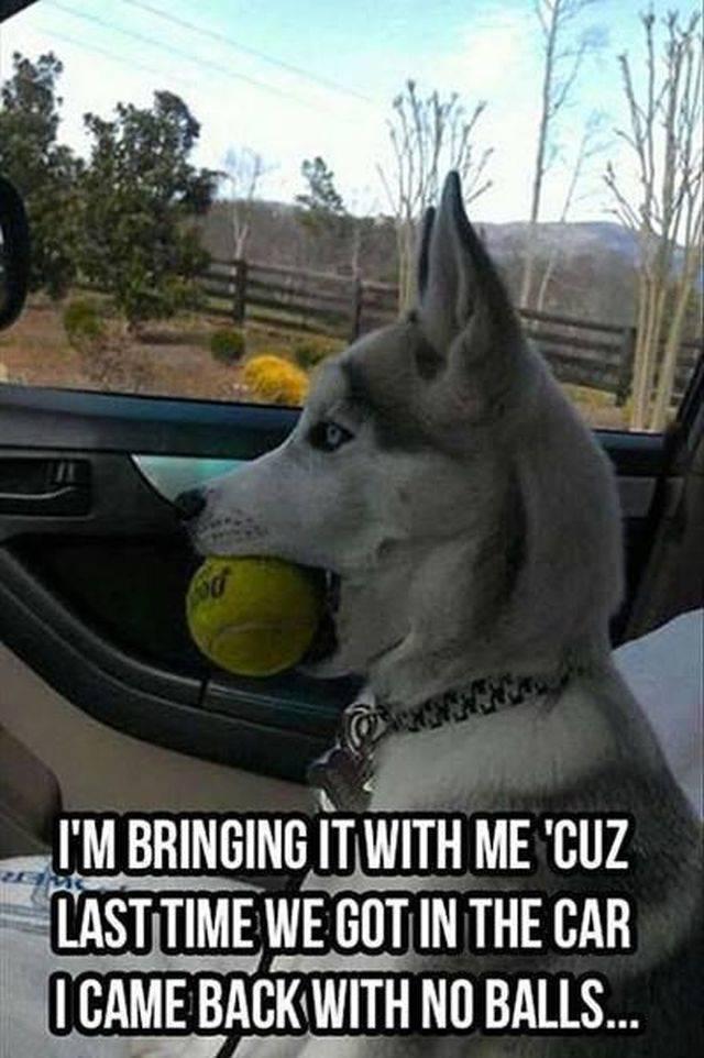 Dog Memes, part 2
