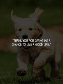 What Your Dogs Wants To Say To You