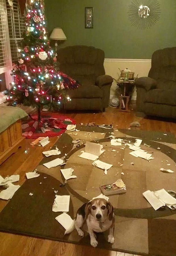 Pets vs. Christmas Trees