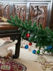 Pets vs. Christmas Trees