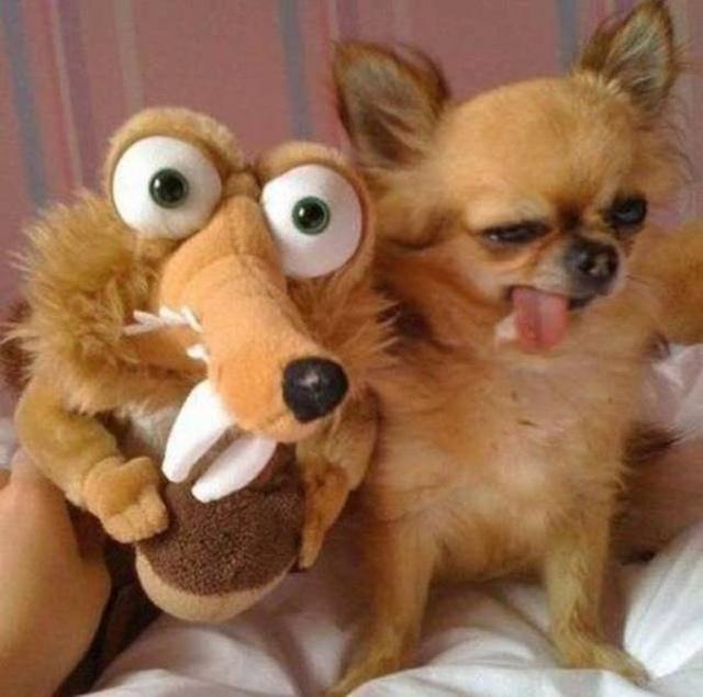Funny Animals, part 56