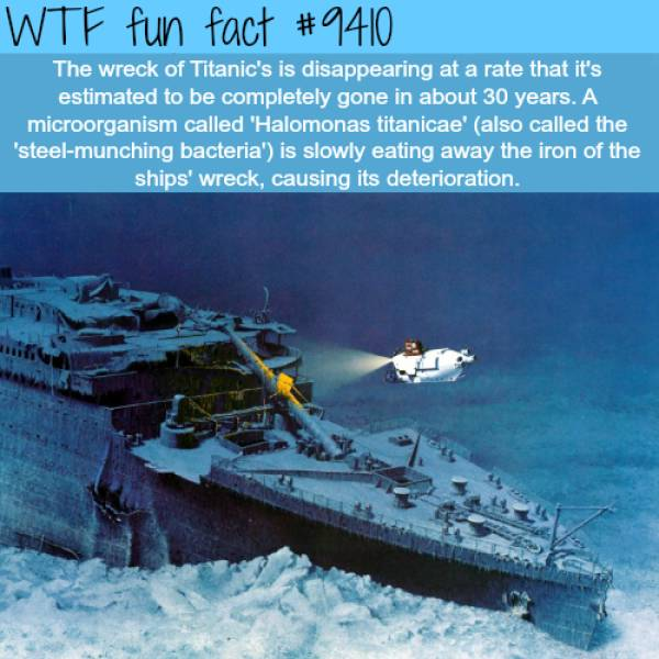 WTF Facts?, part 3