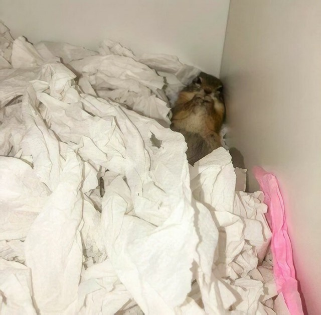 Rescued Squirrel