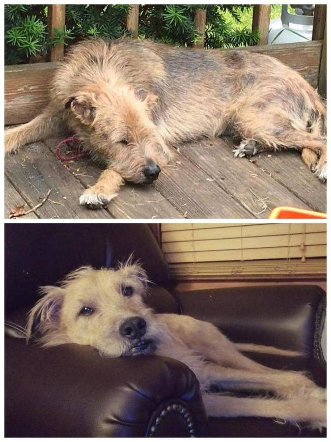 Rescued Animals Before and After