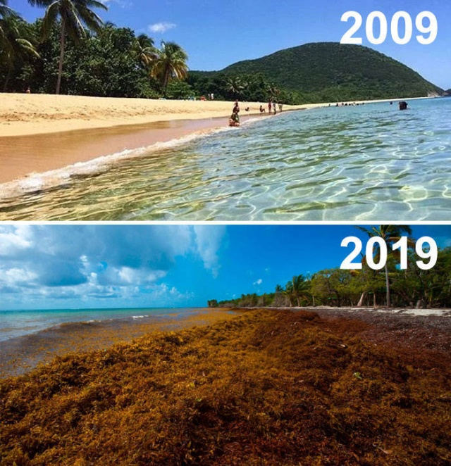 10-Year Challenge In Nature