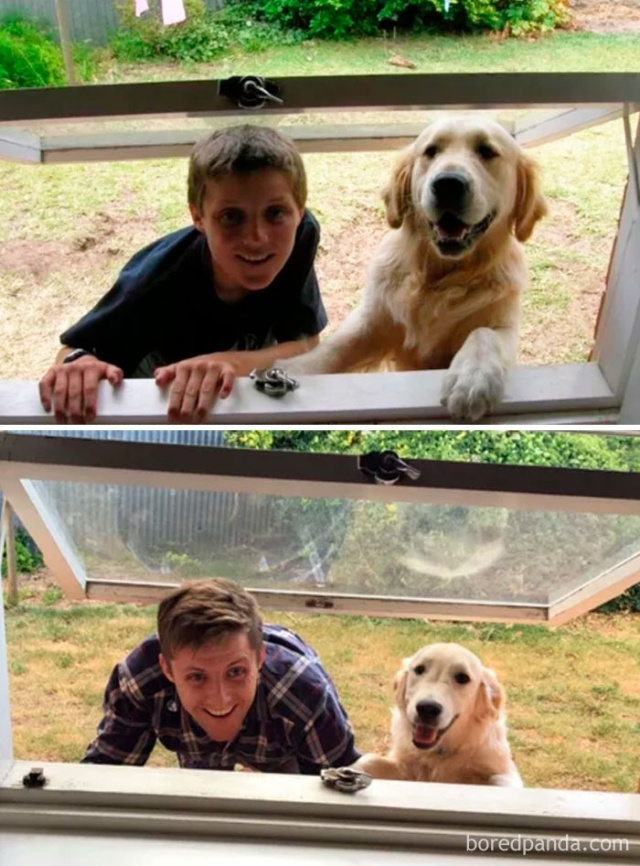 Dogs Growing Up Next To Their Owners