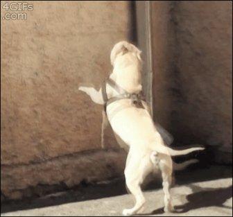Parkour Dogs
