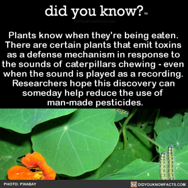 Interesting Facts, part 56
