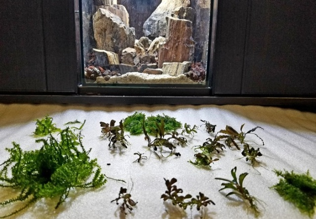 Making A Nice Aquarium
