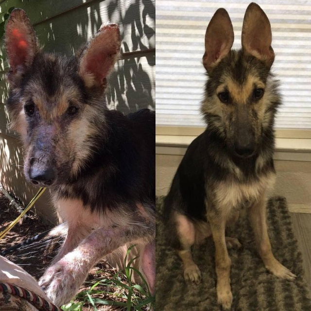 Stray Dog Before And After The Adoption