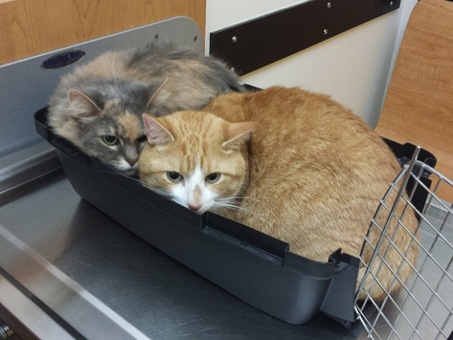 Brilliant Hiding Spots Cats Have Found While Avoiding The Vet