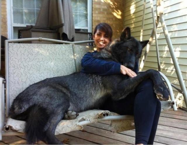 Animals With Strange Sizes