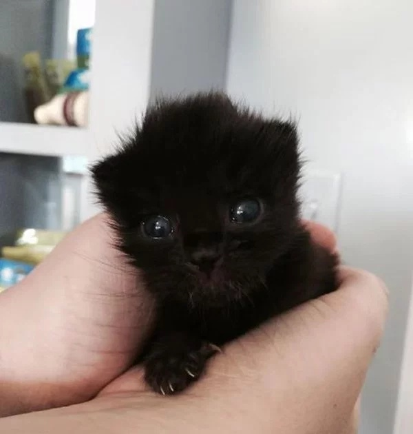 Cute Or Scary