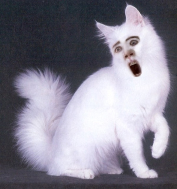 Cats With Nicolas Cage's Face
