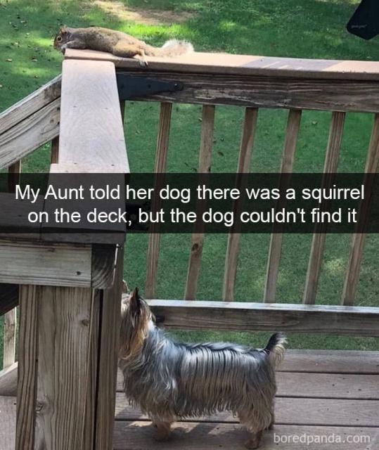 Dog Snapchats