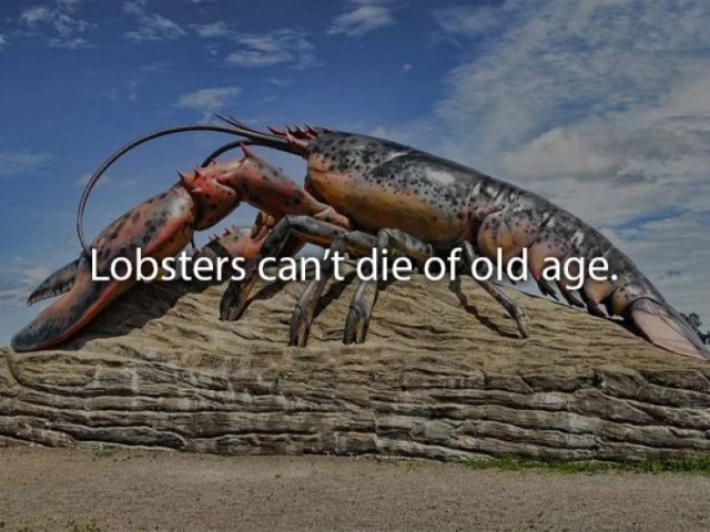 Interesting Facts, part 60