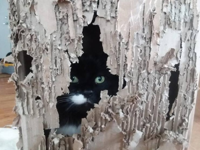 Funny Cats, part 6