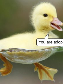 Delivering Bad News With Baby Animals