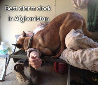 Service Dog Memes