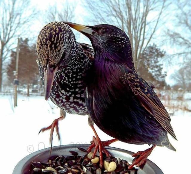 Very Close Photos Of Birds