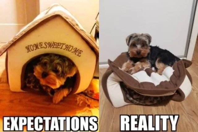 Expectations vs Reality, part 18