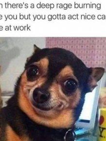 Work Fails And Memes