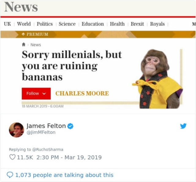 Monkey Looks Like A Journalist