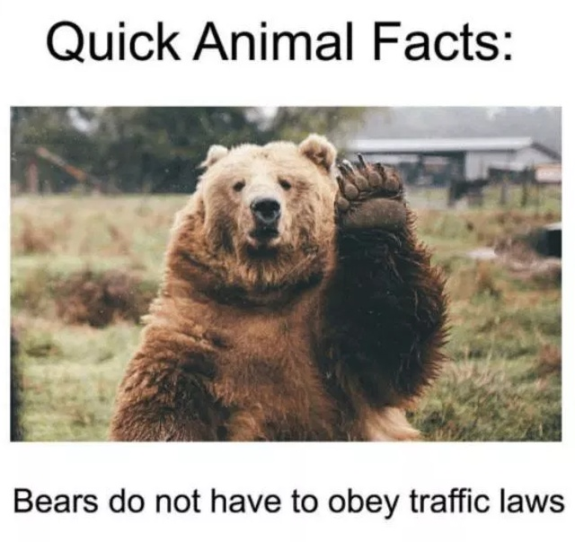 Quick Animal Facts. And They Are 100% True